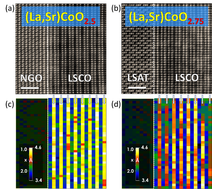 Fig. 4. (a, b) STEM images of [110]-oriented (La,Sr)CoO<sub>3-</sub><sub>\(\delta\)</sub>(LSCO) thin films on different substrates, NdGaO<sub>3</sub> (a, NGO) and (LaAlO<sub>3</sub>)<sub>0.3</sub> (Sr<sub>2</sub>AlTaO<sub>6</sub>)<sub>0.7</sub> (b, LSAT). (c, d) Out-of-plane lattice expansion maps of the LSCO/NGO and LSCO/LSAT systems. The local concentration of oxygen for each system is directly visualized over the region imaged by STEM. Note that the oxygen deficient layers showing chemical expansivity in both LSCO films are indicated by solid arrows. Adapted from Ref. 6.