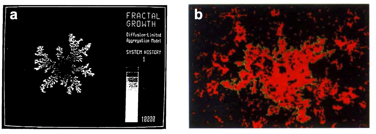 Fig. 3. Models for fractal growth: a. Diffusion-Limited Aggregation Model.[10] b. Correlated Percolation Model.[12]
