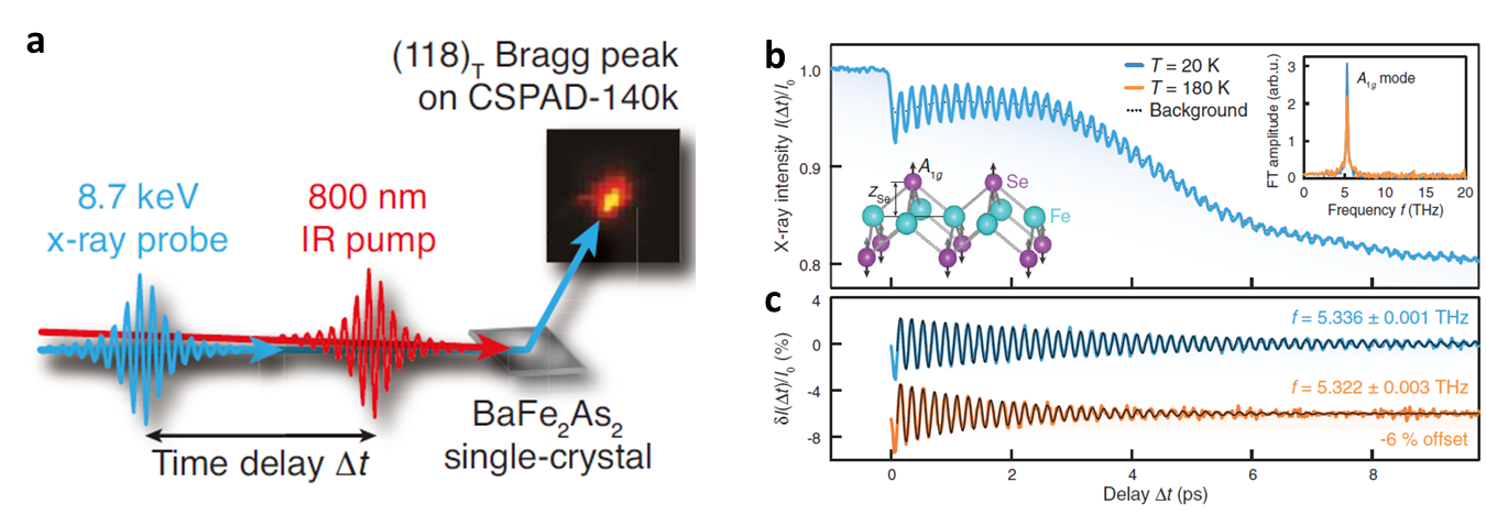 Fig. 3. Ultrafast X-ray scattering experiments on Fe-based superconductors[8,14] (a) Schematic diagram of NIR pumping-X ray probe experiments. (b) Transient X-ray intensity of Bragg-peak of FeSe thin film. (c) Periodic modulations of the scattering intensity after subtracting the overall change of the intensity. The inset shows that the oscillations correspond to the A1g mode of the Se ion in FeSe.