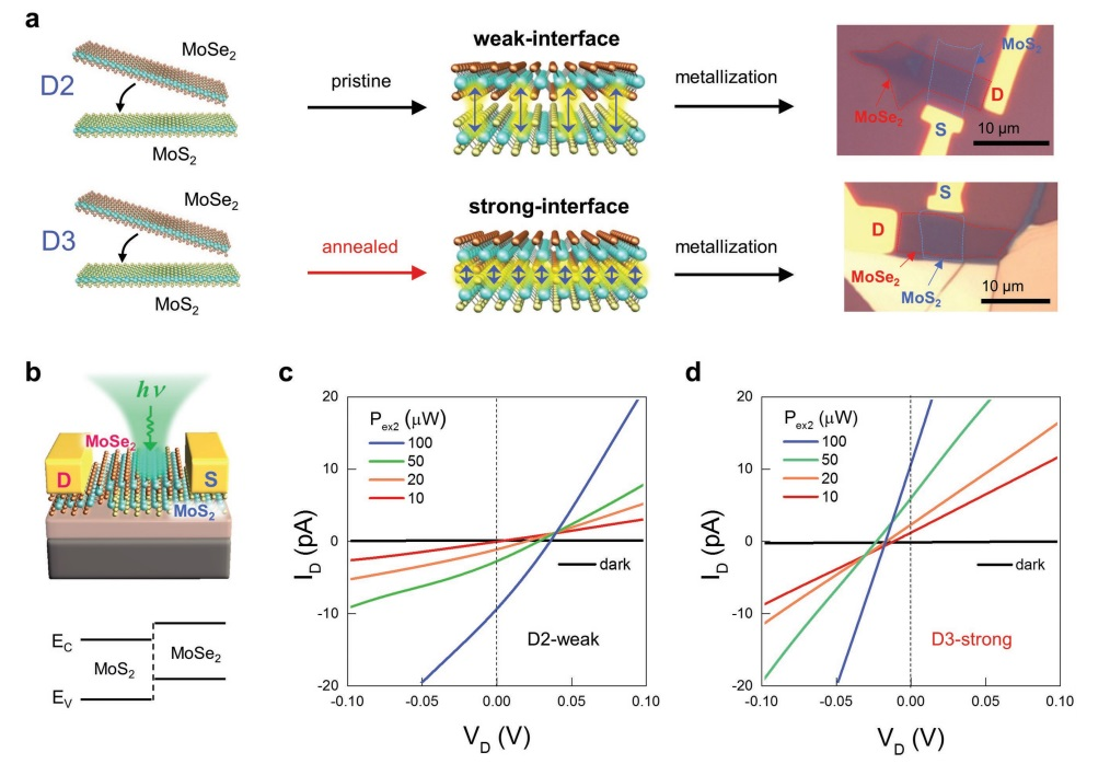 Fig. 3. Tunneling photocurrent assisted by interlayer excitons for strongly coupled MoSe2/MoS2 heterobilayer devices.[8]