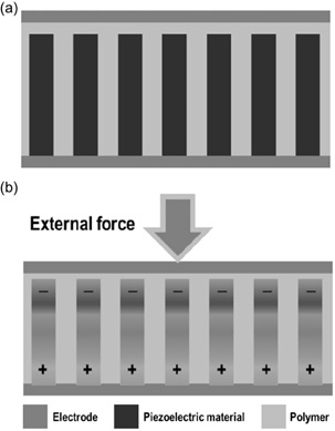 Fig. 2. Schematic of piezoelectric nanogenerator. (a) before applying compressive force and (b) after applying compressive force from [2].
