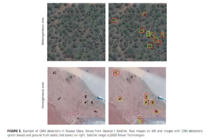 인공지능을 이용한 객체탐지 기법으로 코끼리를 찾은 결과(출처: Remote Sensing in Ecology and Conservatiion 학술논문- Duporge et al.,2020)