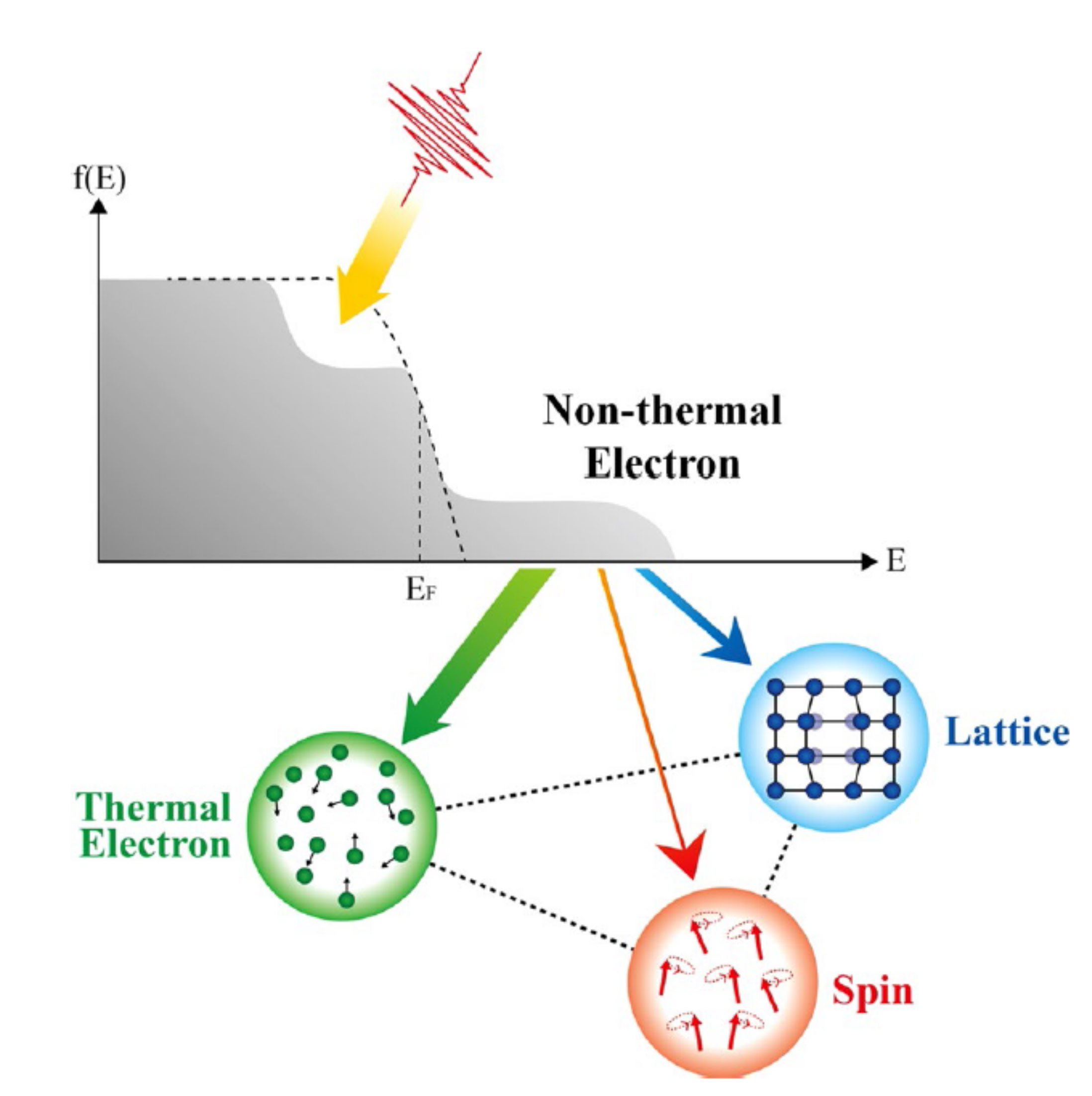 Fig. 7. Schematic of energy interaction among nonthermal electron, thermal electron, lattice, and spin subsystems.[10]