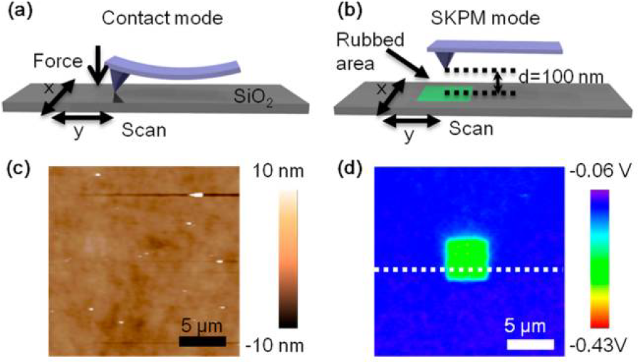 Fig. 4. (a) Schematic illustration of the experiments based on AFM. (b) Triboelectric charge generation by friction between AFM probe and SiO2. (c) AFM topography and (d) SKPM surface potential image. Adapted from Ref. 5.