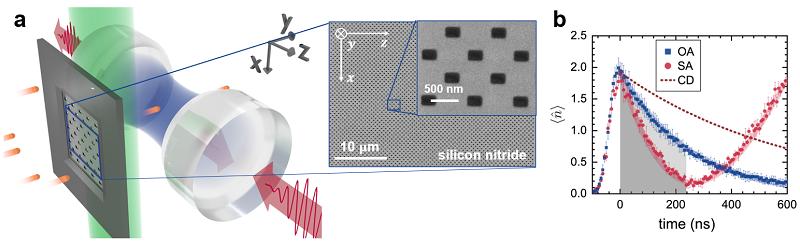 ▲ a. 실험장치도. 원자들이 y축 방향으로 날아가고 공진기가 z축 방향으로 위치해 있다. 10 나노미터 두께의 실리콘 나이트라이드 막에 가로 280 nm, 세로 190 nm의 구멍이 격자모양으로 5000개가 뚫려있다. 대부분의 원자들은 실리콘 나이트라이드 막에 가로막히고 구멍이 뚫려있는 위치로만 원자들이 통과한다. 이렇게 통과한 원자들은 상태 제어용 레이저(초록색)에 의해 초방사 상태로 준비된다. 준비된 원자들이 공진기를 통과하면서 공진기 내부의 빛(파란색)을 흡수하며 초흡수가 일어난다. b. 일반 흡수와 초흡수의 비교. 원자를 바닥상태에 준비하면 일반 흡수(OA)가 일어난다. 그러나 동일한 원자수의 원자들을 양자중첩상태로 준비하고 위상을 조절하면 초흡수(SA)를 발생시킬 수 있다. 초흡수가 일어나 광자가 완전히 흡수된 이후에는(240 ns 이후) 더 이상 흡수할 광자가 없어져서 초방사가 진행된다. 위 실험조건(원자수~10) 아래에서 초흡수가 흡수한 광자 수와 동일한 광자 수를 일반 흡수로 원자에 흡수시키려면 약 10배의 원자가 필요하다.