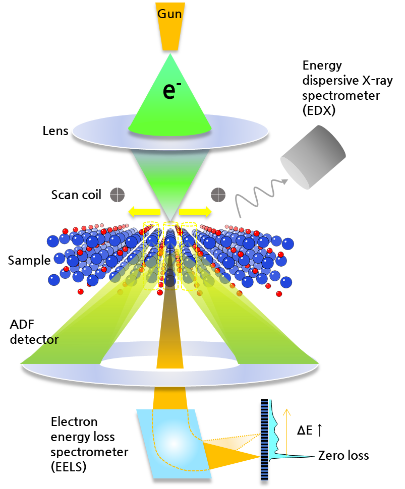 Fig. 5. Schematic illustration of STEM structure equipped with EDX (above sample) and EELS (at the bottom of microscope column). Instrumental advantage of this configuration is to simultaneously perform chemical mapping and electronic structure analysis by the inline EDX and EELS spectrometers on the same atomic sites imaged by STEM-annular dark field (ADF) detector.